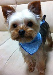 Jinaのアイドル犬くぅです。 僕もたまにお店に来ていま~~す。よろしくね。